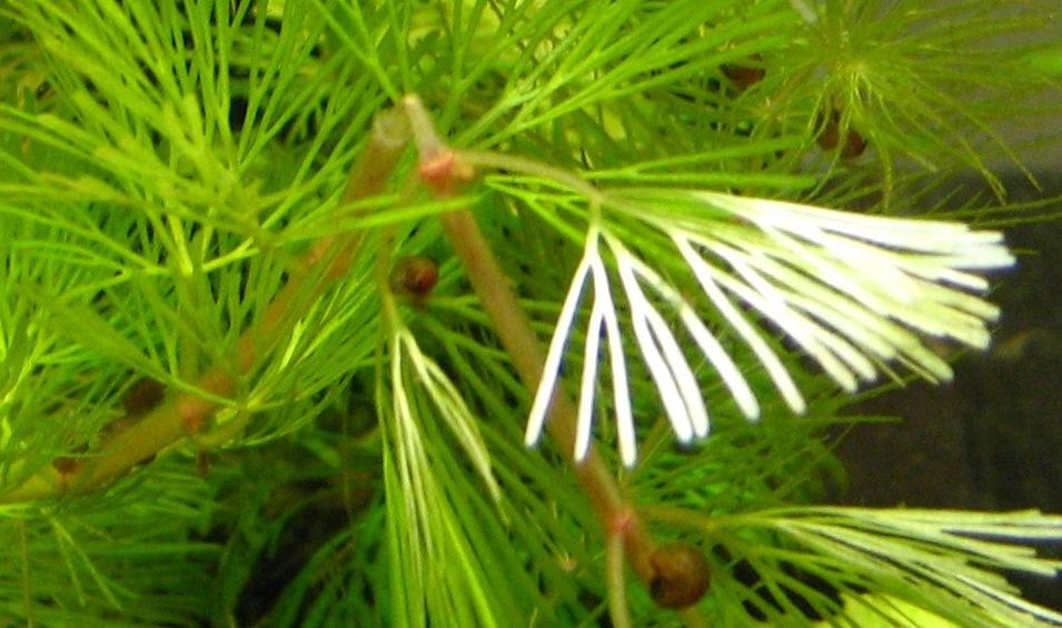 http://www.small-aqua.ru/images/fbfiles/images/12-caa196ef123a5858d60c562f8f609ec2.JPG